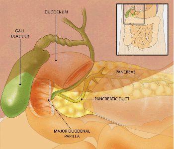 Endoscopic retrograde cholangiopancreatography,